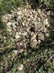 Kieselsteine aus einem Gartenteich zu
