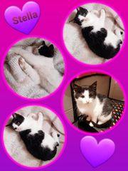 Wunderschöne Baby Katze Kitten Stella