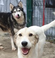Tierschutzhund Kurna ca 1 Jahr