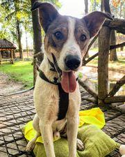 Rüde Hope - ein spezieller Hund