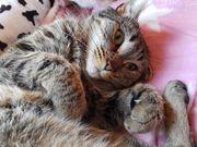 Chiara sucht liebe Katzenmenschen