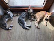 Rosi Tiger und Romeo suchen