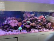 1000l Meerwasseraquarium Komplett