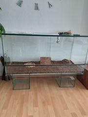 Schildkröte mit Papieren und Terrarium