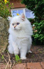 BLH Lady mit blauen Augen