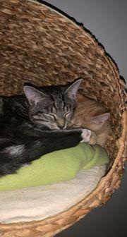 2 Mischlingskatzen