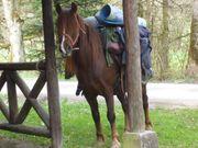 Reiterferien - Reittherapie - Reitunterricht im Gelände