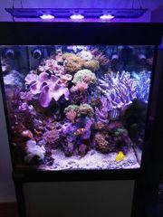 Meerwasser Seewasser Aquarium