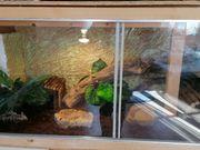 Selbstgebautes terrarium günstig zu verkaufen