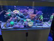 Meerwasseraquarium Eheim 450
