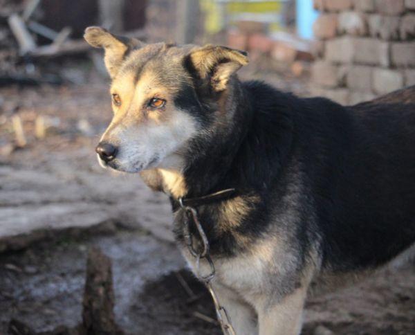 Tierschutzhündin Laila