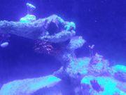 Deluxe Reeftank von Aqua perfekt