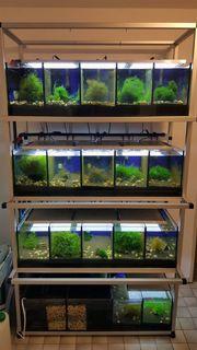 Aquarium Zuchtanlage