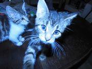 2 Kitten aus dem Tierschutz