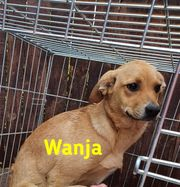 Hübsches Hundemädel WANJA