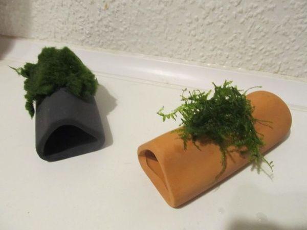 Verkaufe bepflanzte Ablaichhöhlen