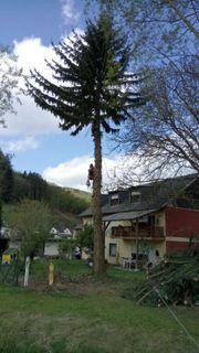 Baum fällen Baumpflege Problemfällung Sturmschaden