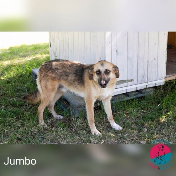 Jumbo - will hoch hinaus