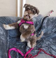 Salon für Hundepflege sucht neues
