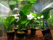 Harte Pflanzen