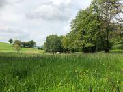 Pferde Sommerweide Weide Weideplätze Weide