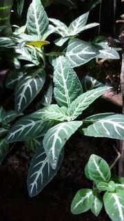 großes 4 Arten Regenwald - Terrarium