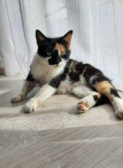 Katze Frieda sucht ihr Traumzuhause