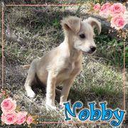 Nobby sucht sein Zuhause