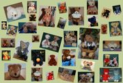 Verschiedene Sammlerbären