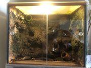 Dendrobaten Leucomelas - Terrarium 40x30x40 cm -
