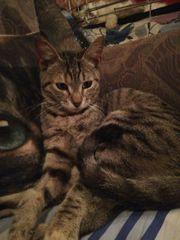 Liebes Kätzchen Elisa sucht ihr