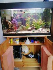 Süßwasser Aquarium 110 Liter