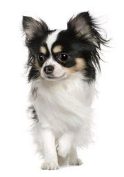 Suche Hundebetreuung