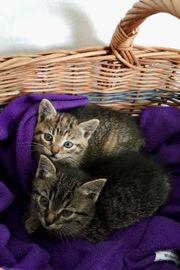 2 süße Katzenbabies abzugeben