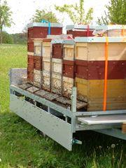 Bienenvölker Carnica auf Zander