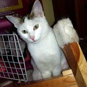 Kätzchen Daisy hat ihren Koffer