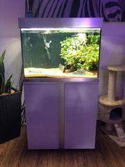 Aquarium Eheim Proxima 175