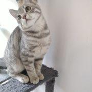 Kitten zum Verlieben