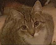 Katzen Kitten Kätzchen