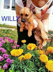 Willy- bald in Nürnberg auf