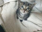 süße Mix Kätzchen Katzenbabys Babykatzen