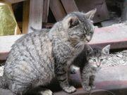 kleine Kätzchen suchen baldmöglichst ein