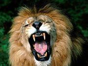 Den Löwen im Mann erwecken