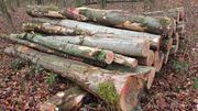 Brennholz Kaminholz Esche