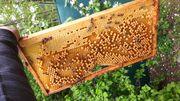 SUCHE Stellplatz für Bienenstöcke Wald-