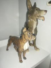 Dogge Schäferhund