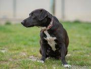 CASSY - Eine liebe Hundemama wartet