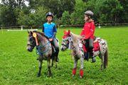 Partbred Classic Ponystute