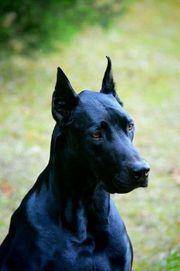 Suche Welpe Junghund