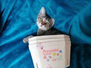 Kleine süße Kätzchen suchen ein